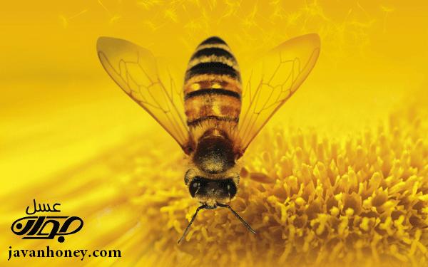 عسل و زنبور عسل