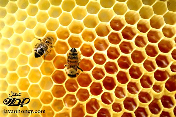 خانه سازي زنبور عسل