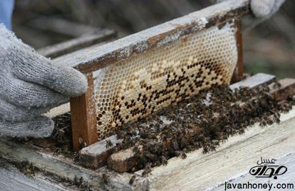 توليد عسل طبيعي