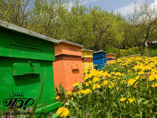 قند موجود در عسل