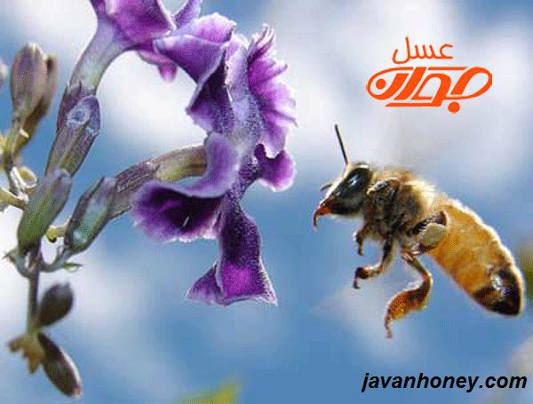 درباره ی عسل بیشتر بدانیم