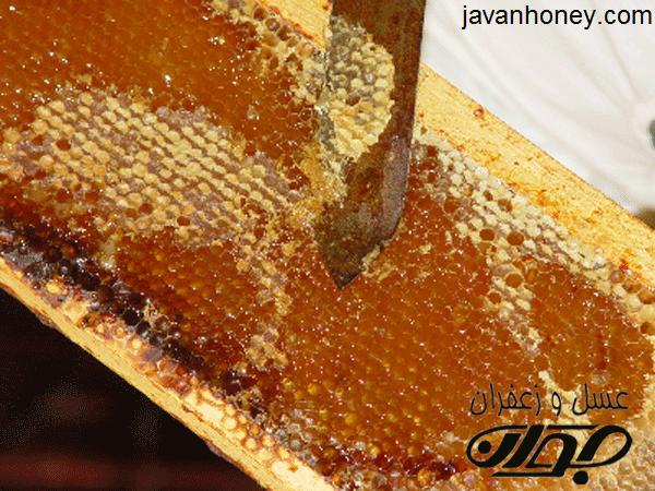 چگونگی تولیدموم توسط زنبورعسل