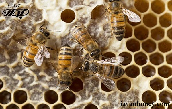 نظم زندگی زنبورعسل