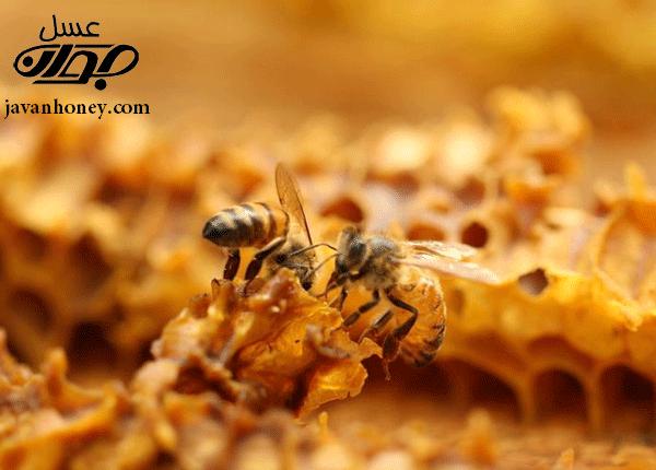 معده زنبور عسل