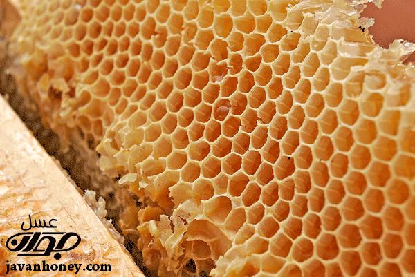 بسته بندی عسل های شان