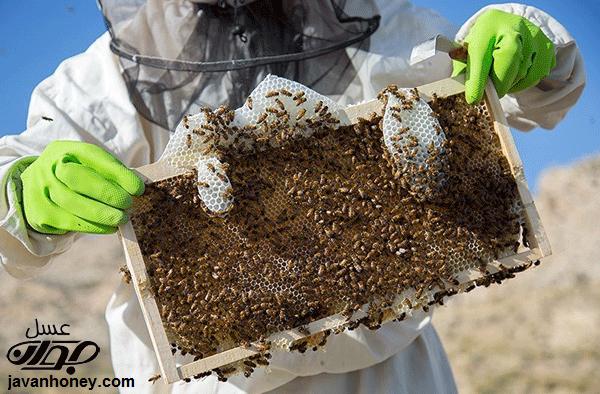 گیاه درمانی با عسل